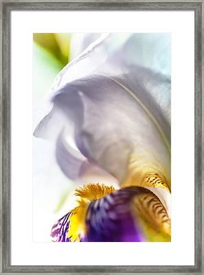 Light Within. Macro Iris Series Framed Print