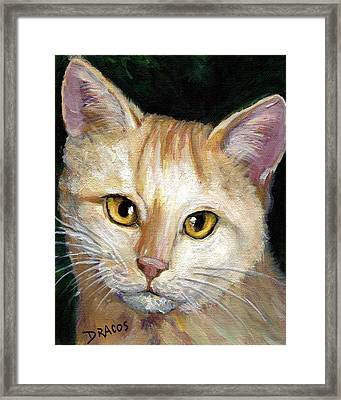 Light Yellow Tabby Cat Framed Print by Dottie Dracos