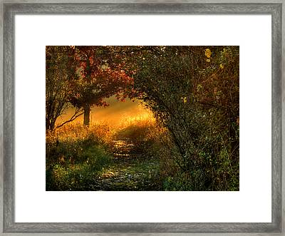 Lighted Path Framed Print by Thomas Young