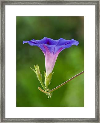 Lightened Framed Print