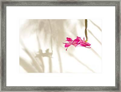 Light..flower..shadow 2 Framed Print by Kaye Menner