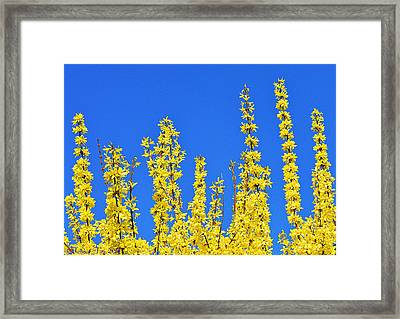 Lighting The Spring Sky Framed Print