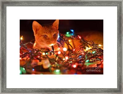 Lighting Up The Christmas Cat Framed Print