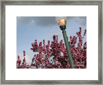 Framed Print featuring the photograph Lighting Up The Day by Michael Krek