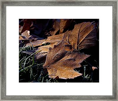 Lightly Frosted Framed Print