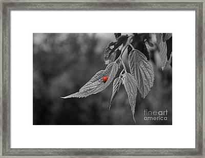 Lightness Framed Print by Simona Ghidini