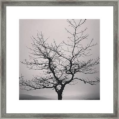 Lightness Tree Framed Print by Jose Barbosa