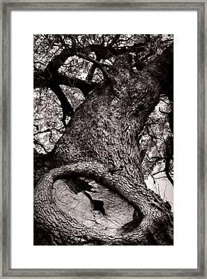 Lightning Tree  Framed Print by Trish Mistric