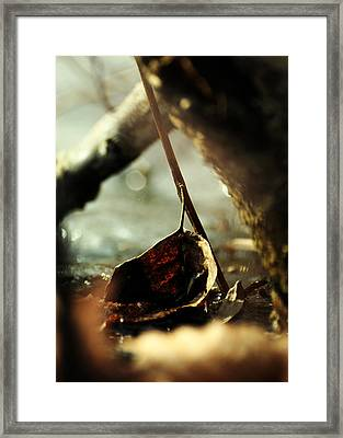 Like A Copper Ladle Scooping Up The Sun Framed Print by Rebecca Sherman