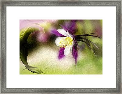 Like A Dove Framed Print by K Powers Photography