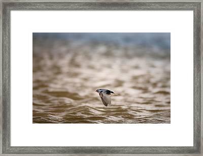 Like A Flying Jet.. Framed Print