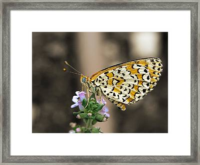 Framed Print featuring the photograph Like A Flying Tiger by Meir Ezrachi