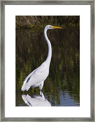 Like A Great Egret Monument Framed Print by John M Bailey
