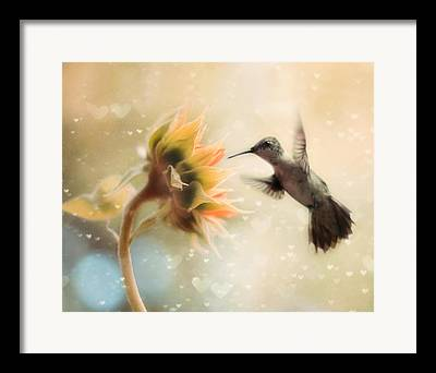Hummingbird Art Framed Prints