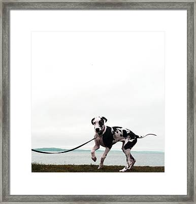 Like A Puppy On A String Framed Print