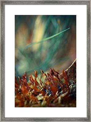 Like An Undersea Adventure Framed Print