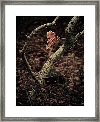 Like Glue Framed Print by Odd Jeppesen