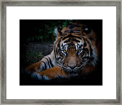 Like My Eyes? Framed Print by Robert L Jackson
