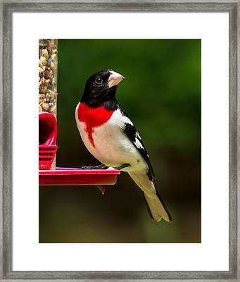 Like My New Suit? Framed Print