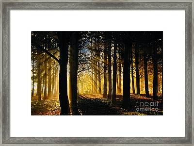 Like The First Morning Framed Print by Lee Craig