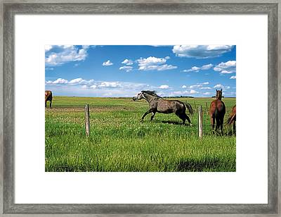 Like The Wind 2 Framed Print by Terry Reynoldson