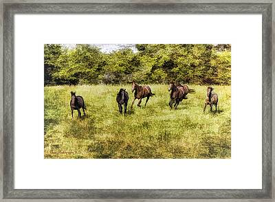 Like The Wind Framed Print