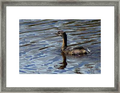 Lil Duck Framed Print by Rhonda Humphreys