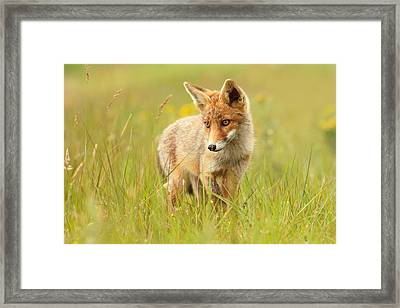Lil' Hunter - Red Fox Cub Framed Print by Roeselien Raimond