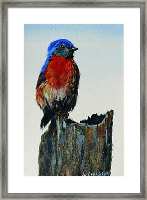 Lil Jewel Framed Print by Susan Duda