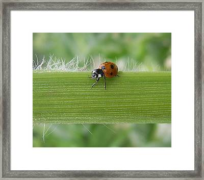Framed Print featuring the photograph Lil Lady by Tamyra Crossley