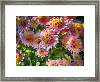 Lil' Mums Framed Print by Phil Abrams