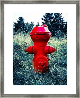 Lil Red Framed Print by Ronda Broatch