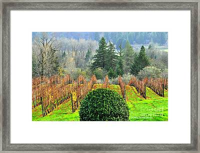 Li'l Vineyard Framed Print