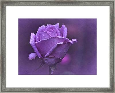 Lila Rose Framed Print