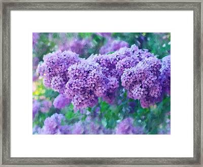 Lilac Cadenza Framed Print