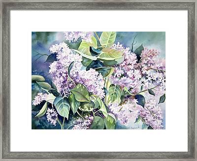 Lilac Delight Framed Print by Deborah Ronglien