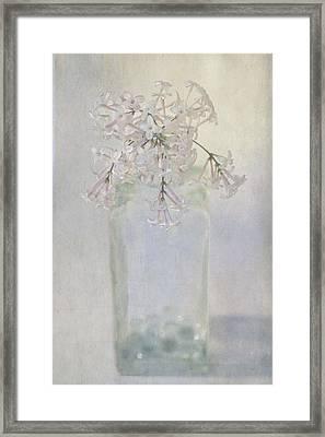 Lilac Flower Framed Print