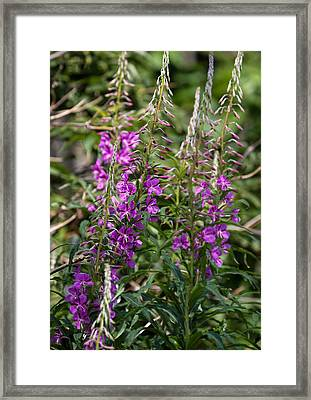 Framed Print featuring the photograph Lilac Flower by Leif Sohlman