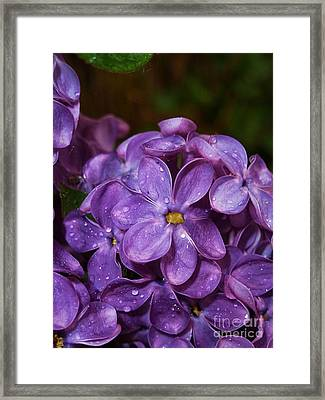 Lilac Flowers Framed Print