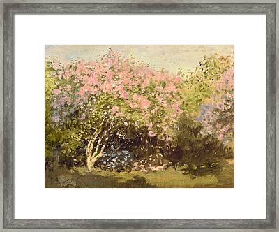 Lilac In The Sun, 1873 Framed Print