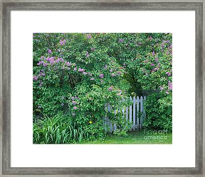 Framed Print featuring the photograph Lilac Season by Alan L Graham