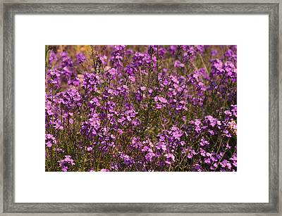 Lilac Framed Print by Svetlana Sewell