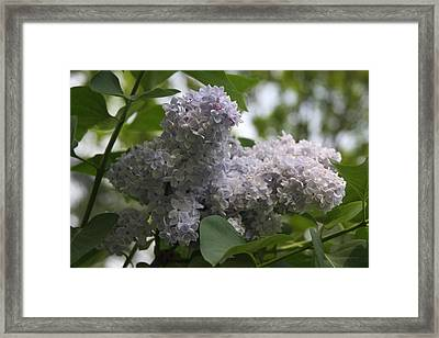 Framed Print featuring the photograph Lilac by Vadim Levin