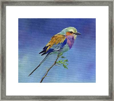 Lilacbreasted Roller Framed Print by David Stribbling