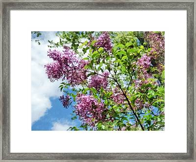 Lilacs And Clouds Framed Print by Susan Savad