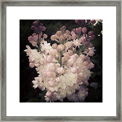 Lilacs Are Blooming Framed Print by Christy Beckwith