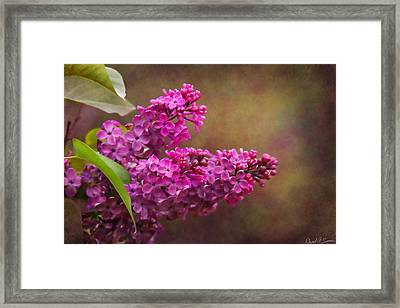 Lilacs Framed Print by David Simons