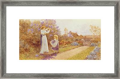 Lilacs Framed Print by Thomas James Lloyd