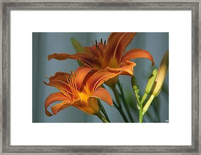 Lilies 1 Framed Print
