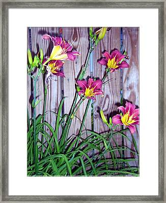 Lilies Against The Wooden Fence Framed Print by Danielle  Parent